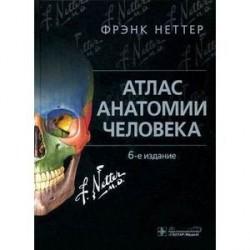 Атлас анатомии человека.