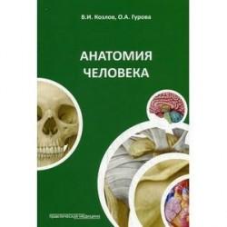 Анатомия человека: Учебное пособие.