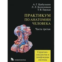 Практикум по анатомии человека. В 4 частях. Часть 3. Сердечно-сосудистая и лимфоидная системы