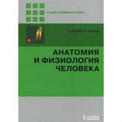 Анатомия и физиология человека.