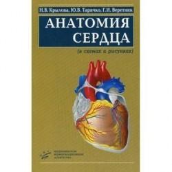 Анатомия сердца. В схемах и рисунках. Учебное пособие. Гриф УМО по медицинскому образованию