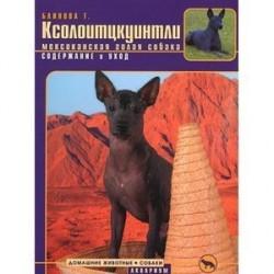 Ксолоитцкуинтли (мексиканская голая собака) . Содержание и уход