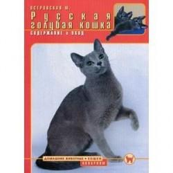Русская голубая кошка. Содержание и уход