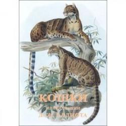 Кошки (набор из 15 открыток)
