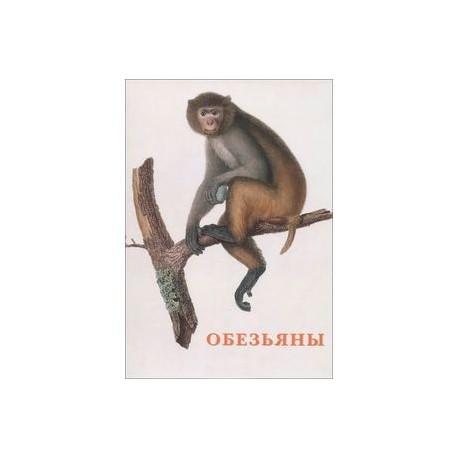 Обезьяны (набор из 15 открыток)