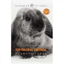 Карликовые кролики: правила ухода