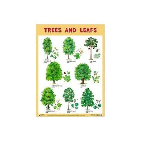Плакат. Trees and Leafs (Деревья и листья)