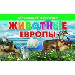 Карточки. Животные Европы