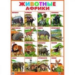 Плакат. Животные Африки (550х770)