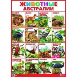 Плакат. Животные Австралии (550х770)