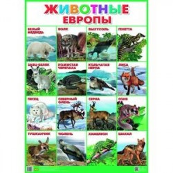Плакат. Животные Европы (550х770)
