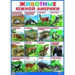 Плакат. Животные Южной Америки (550х770)