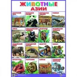 Плакат. Животные Азии (550х770)