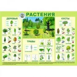 Растения. Плакат