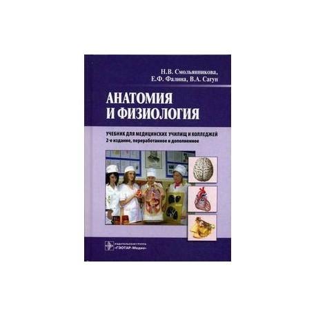 Анатомия и физиология