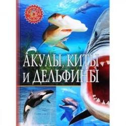 ПДЭ Акулы, киты и дельфины
