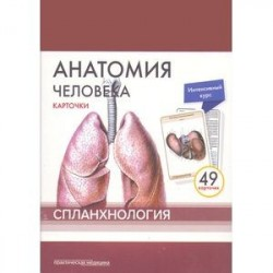 Анатомия человека. Спланхнология (49 карточек)