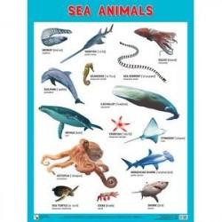 Морские обитатели. Плакаты 'Sea Animals'