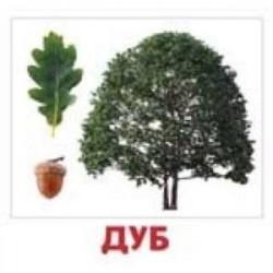 Комплект карточек 'Деревья'