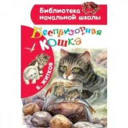 Беспризорная кошка