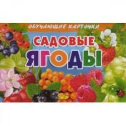 Садовые ягоды. Обучающие карточки
