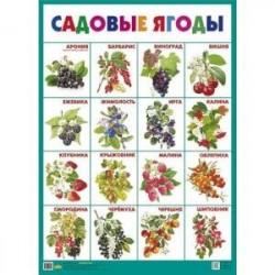 Садовые ягоды. Плакат