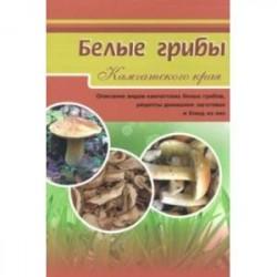 Белые грибы. Описание видов камчатских белых грибов, рецепты домашних заготовок и блюд из них