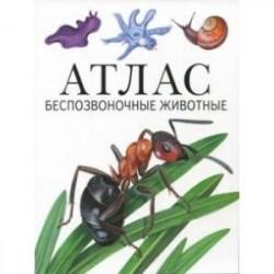 Атлас. Беспозвоночные животные