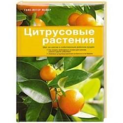 Цитрусовые растения