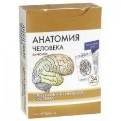 Анатомия человека. Центральная нервная система. КАРТОЧКИ (34 шт)