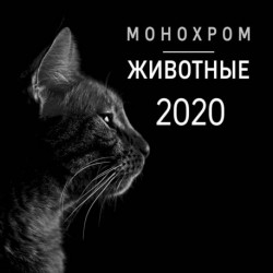 Монохром. Животные. Календарь настенный на 2020 год