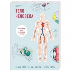 Тело человека. Детский интерактивный атлас по анатомии с вырубкой. Разбери свое тело на 6 систем. Слой за слоем