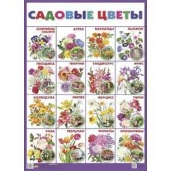 Плакат 'Садовые цветы'