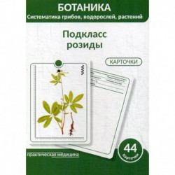 Ботаника. Систематика грибов, водорослей, растений. Подкласс розиды
