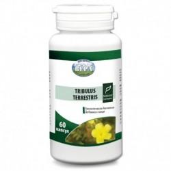 Tribulus Terrestris 60 капсул