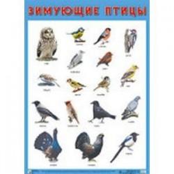 Плакат «Зимующие птицы»