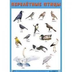 Плакат «Перелетные птицы»