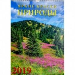 Календарь 2019 'Яркие краски природы' (11916)