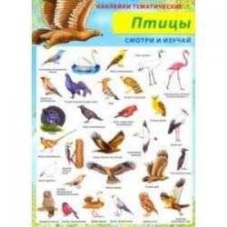 Птицы. Наклейки тематические