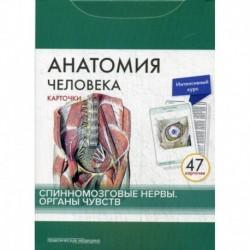 Анатомия человека. Спинномозговые нервы. Органы чувств