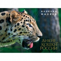 Дикие кошки России: иллюстрированный авторский фотоальбом