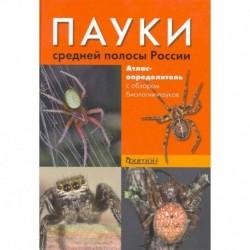 Пауки средней полосы России.