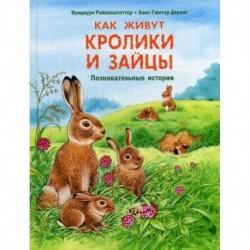 Как живут кролики и зайцы
