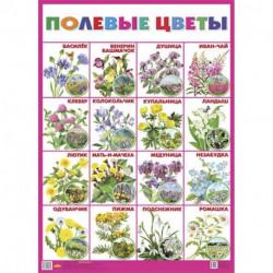 Плакат 'Полевые цветы'