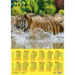 Календарь настенный на 2022 год 'Год тигра. Приятное купание' (90223)