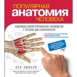 Популярная анатомия человека. Подробное иллюстрированное руководство с тестами для самоконтроля