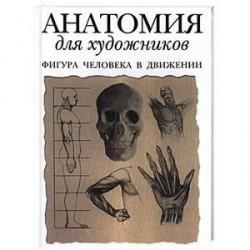 Анатомия для художников: фигура человека в движении