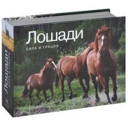 Лошади. Сила и грация