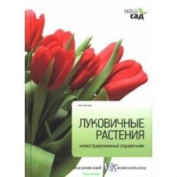 Луковичные растения. Иллюстрированный справочник